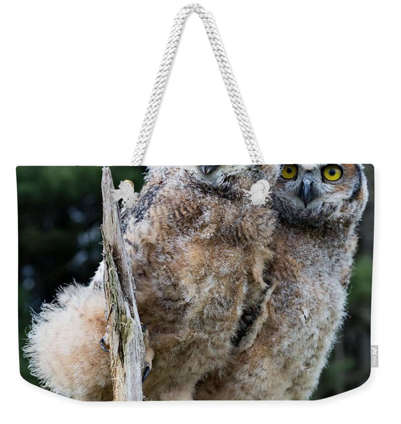 Great Horned Owl Weekender Tote Bag featuring the photograph Great Horned Owlets by Barbara McMahon