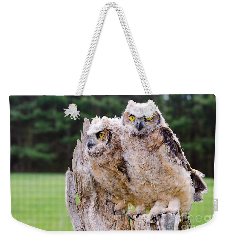 Great Weekender Tote Bag featuring the photograph Great Horned Owlets by Les Palenik