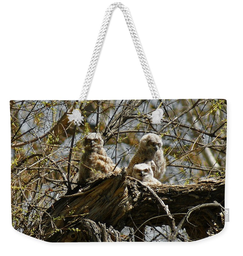 Birds Weekender Tote Bag featuring the photograph Great Horned Owlets Photo by Ernie Echols