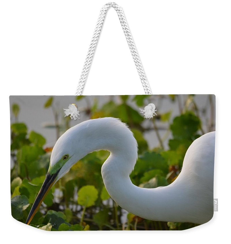Great Egret Weekender Tote Bag featuring the photograph Great Lights Up The Greens by Patricia Twardzik
