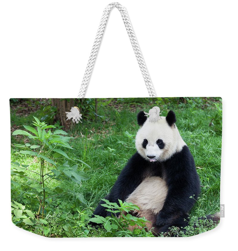 Chinese Culture Weekender Tote Bag featuring the photograph Great Panda Showing Its Tongue - by Fototrav