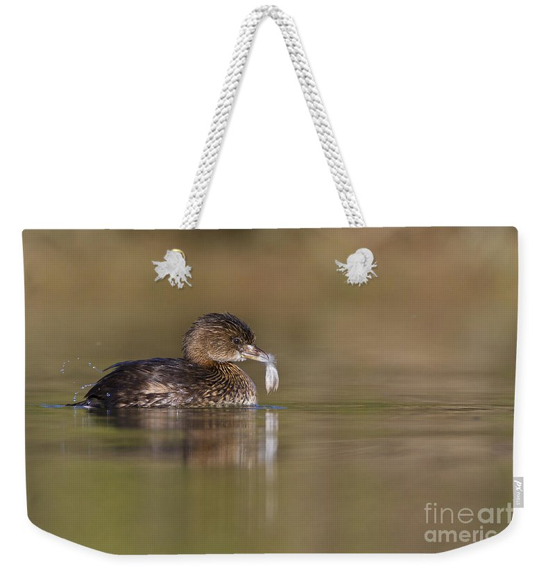 Pied Bill Grebe Weekender Tote Bag featuring the photograph Grebe With Feather by Bryan Keil