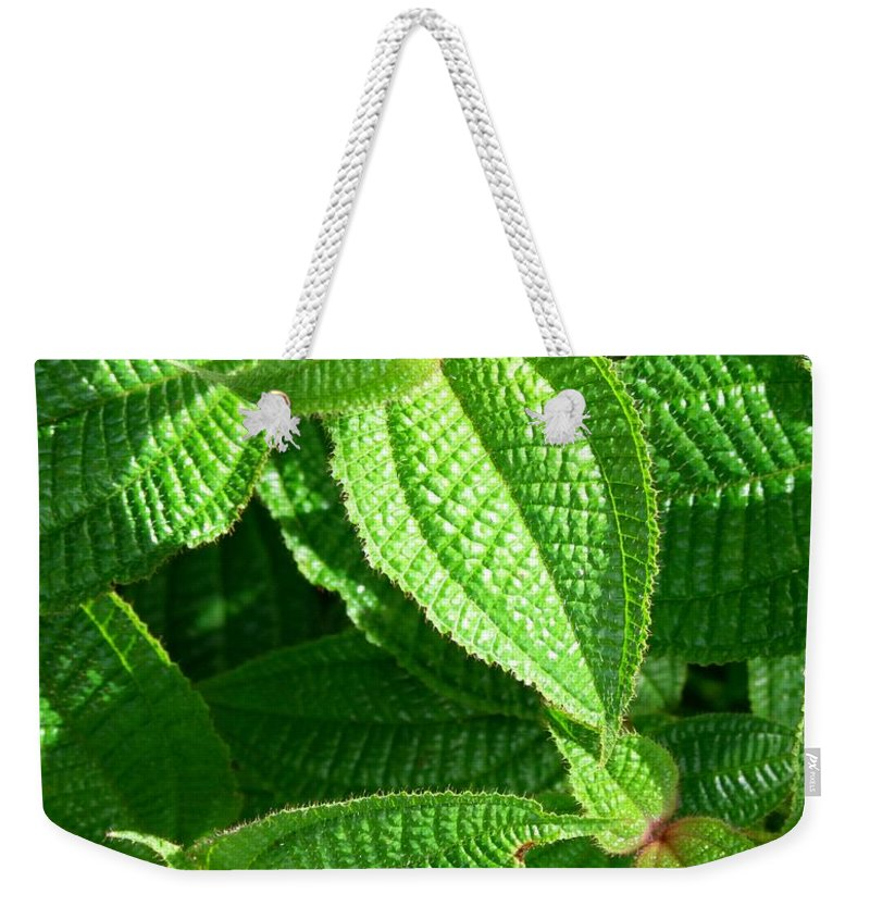 Leaves Weekender Tote Bag featuring the photograph Green And Ruffled by Mary Deal