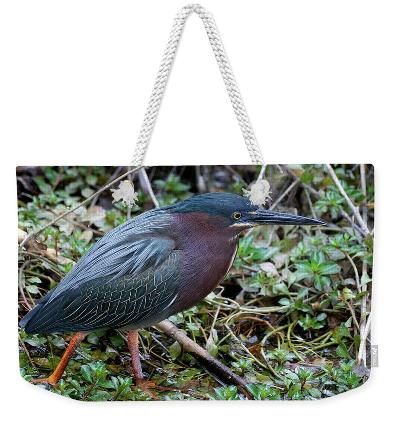 Heron Weekender Tote Bag featuring the photograph Green Heron Stalking by Larry Allan