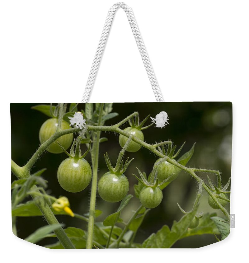 Green Weekender Tote Bag featuring the photograph Green Cherry Tomatoes On The Vine by Kathy Clark