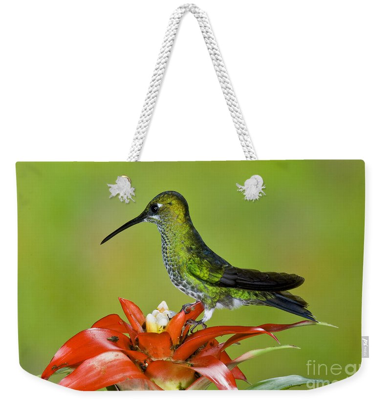 Green-crowned Brilliant Weekender Tote Bag featuring the photograph Green-crown Brilliant Female by Anthony Mercieca