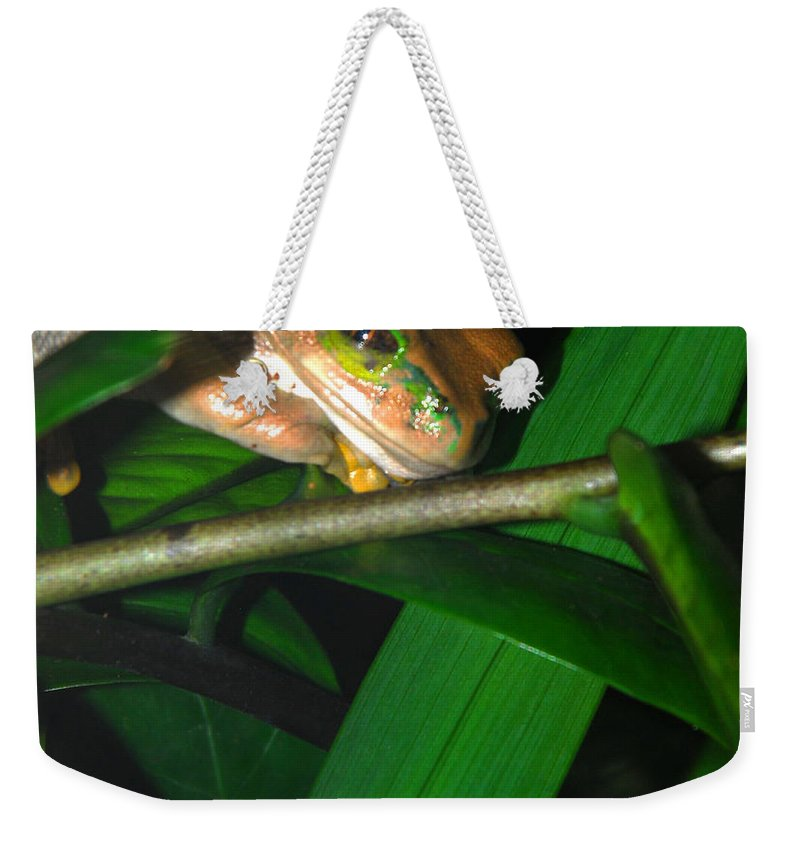 Weekender Tote Bag featuring the photograph Green Eye'd Frog by Optical Playground By MP Ray