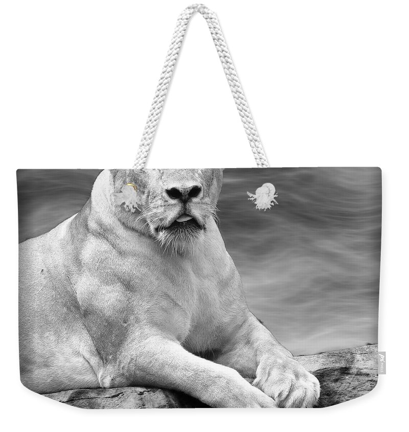 Lioness Weekender Tote Bag featuring the photograph Green Eyes by Ben Yassa