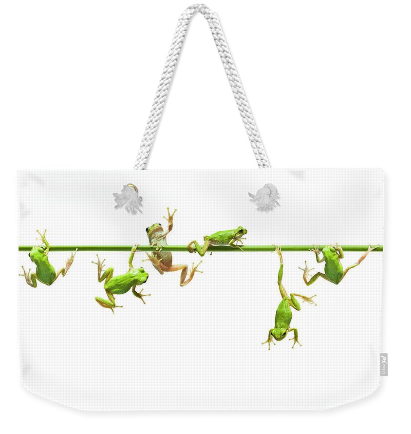 Hanging Weekender Tote Bag featuring the photograph Green Flogs Each Other Freely On Stem by Yuji Sakai