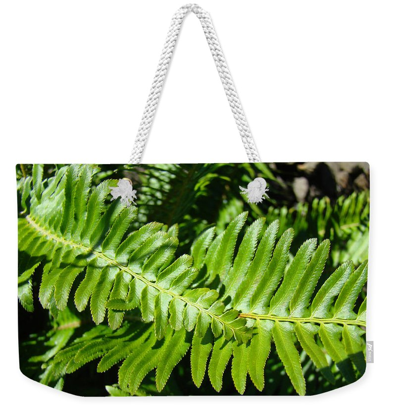 Fern Weekender Tote Bag featuring the photograph Green Forest Ferns Art Prints Fern Branches leaves by Patti Baslee