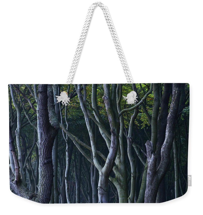 Beech Tree Weekender Tote Bag featuring the photograph Green Glow by Heiko Koehrer-Wagner
