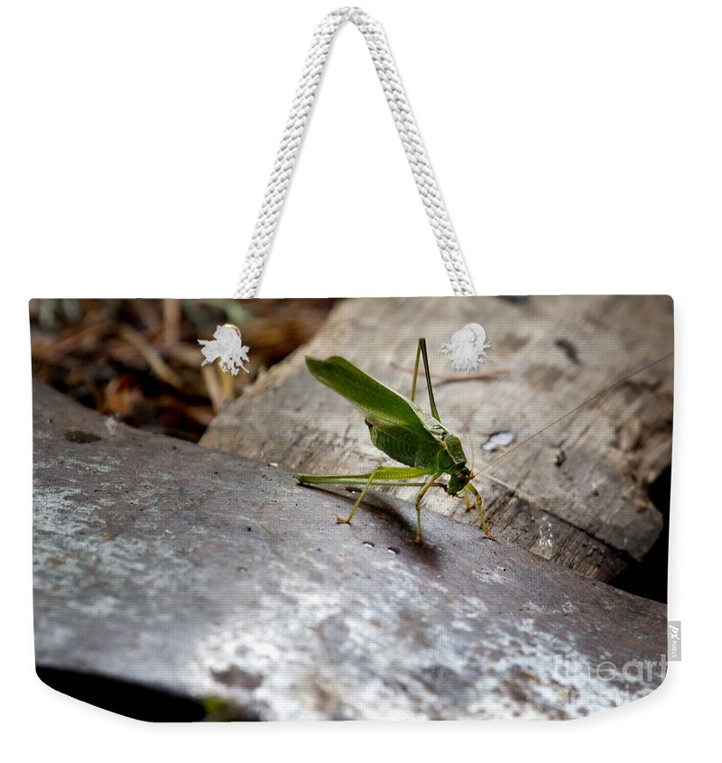 Grasshopper Weekender Tote Bag featuring the photograph Green Grasshopper On Axe by Belinda Greb