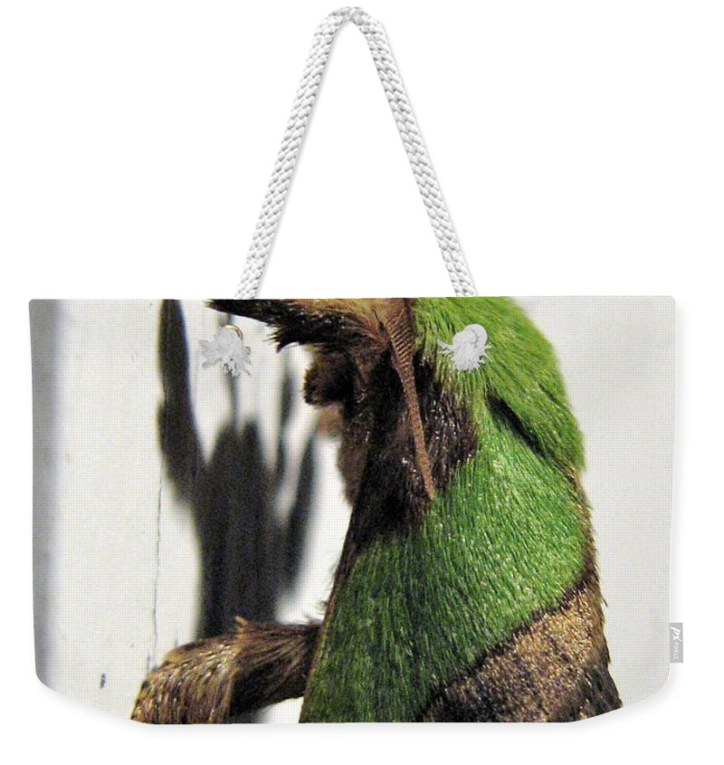 Moths Weekender Tote Bag featuring the photograph Green Hair Moth by Christopher Plummer