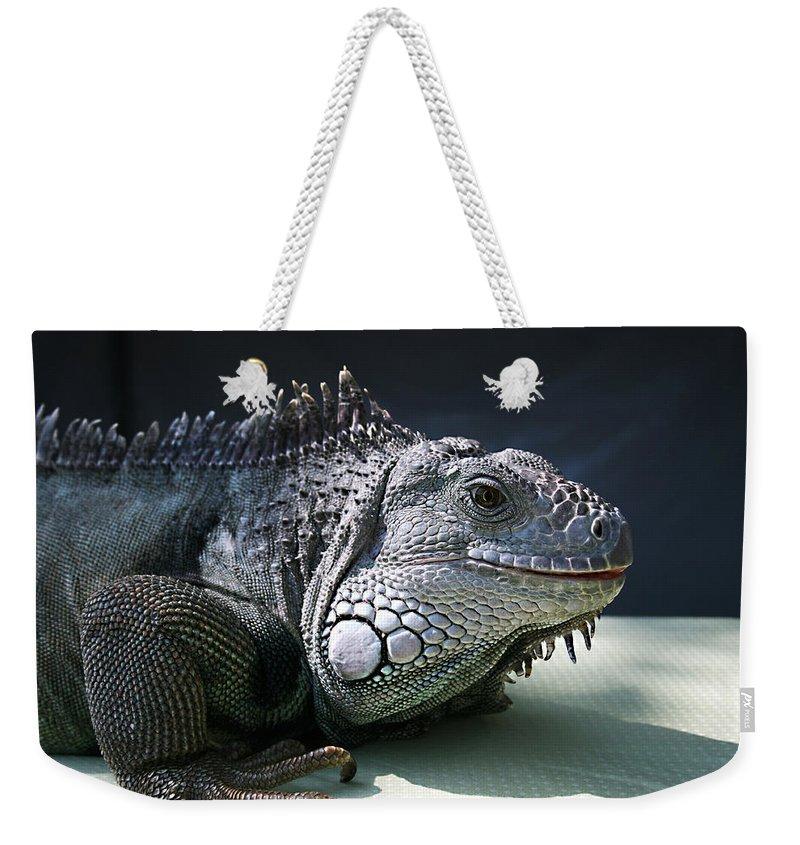 Green Iguana Weekender Tote Bag featuring the photograph Green Iguana 1 by Ellen Henneke