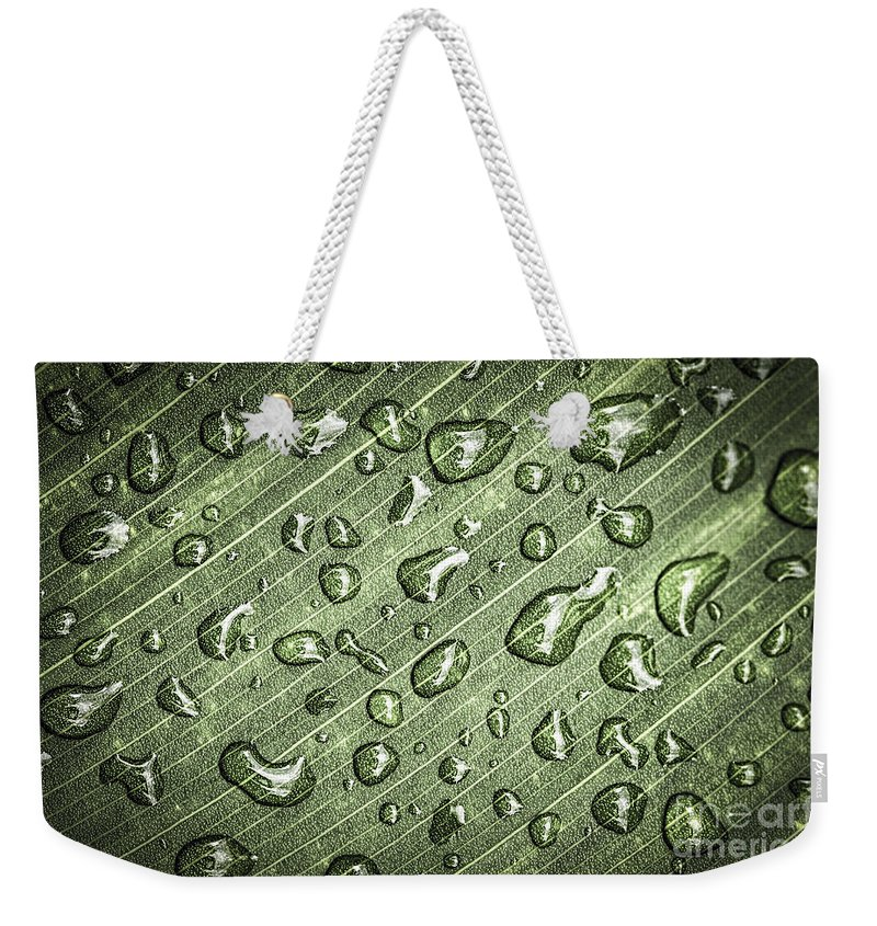 Plant Weekender Tote Bag featuring the photograph Green Leaf Abstract With Raindrops by Elena Elisseeva