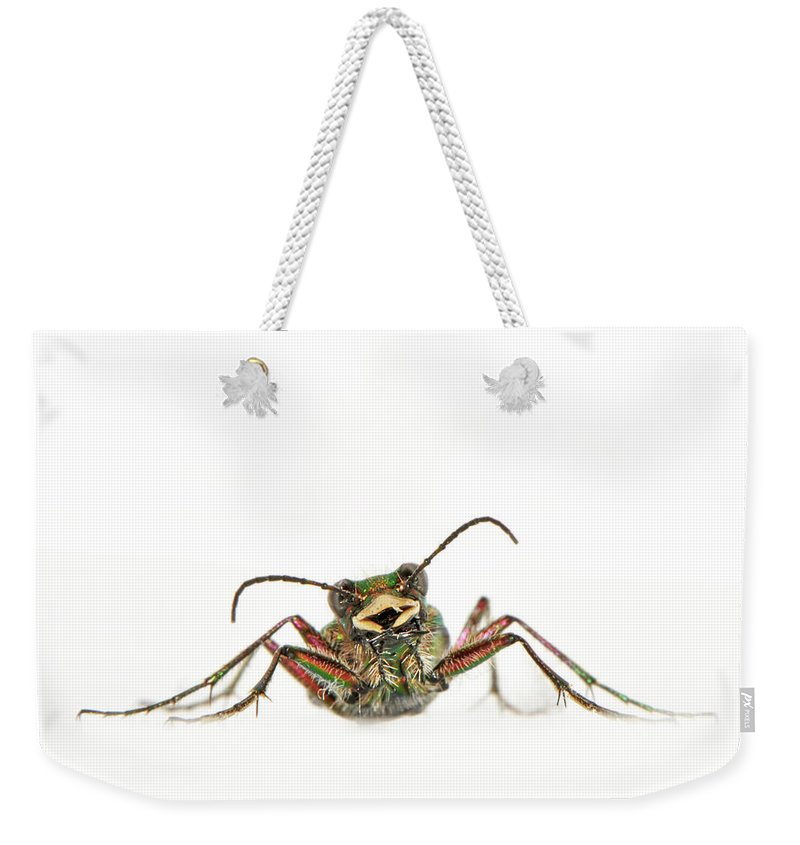 White Background Weekender Tote Bag featuring the photograph Green Tiger Beetle by Robert Trevis-smith