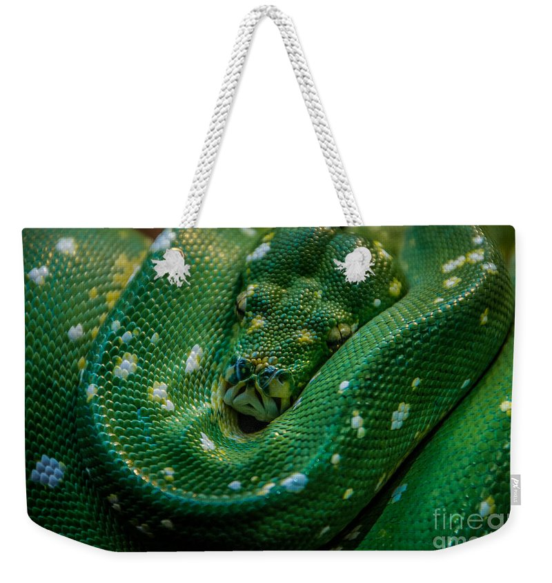 Green Tree Python Weekender Tote Bag featuring the photograph Green Tree Python Curled by Grace Grogan