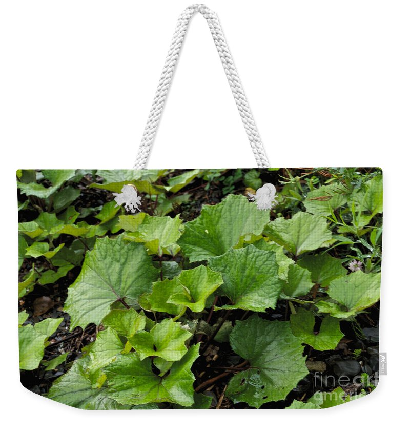 Green Weekender Tote Bag featuring the photograph Green Vine by William Norton