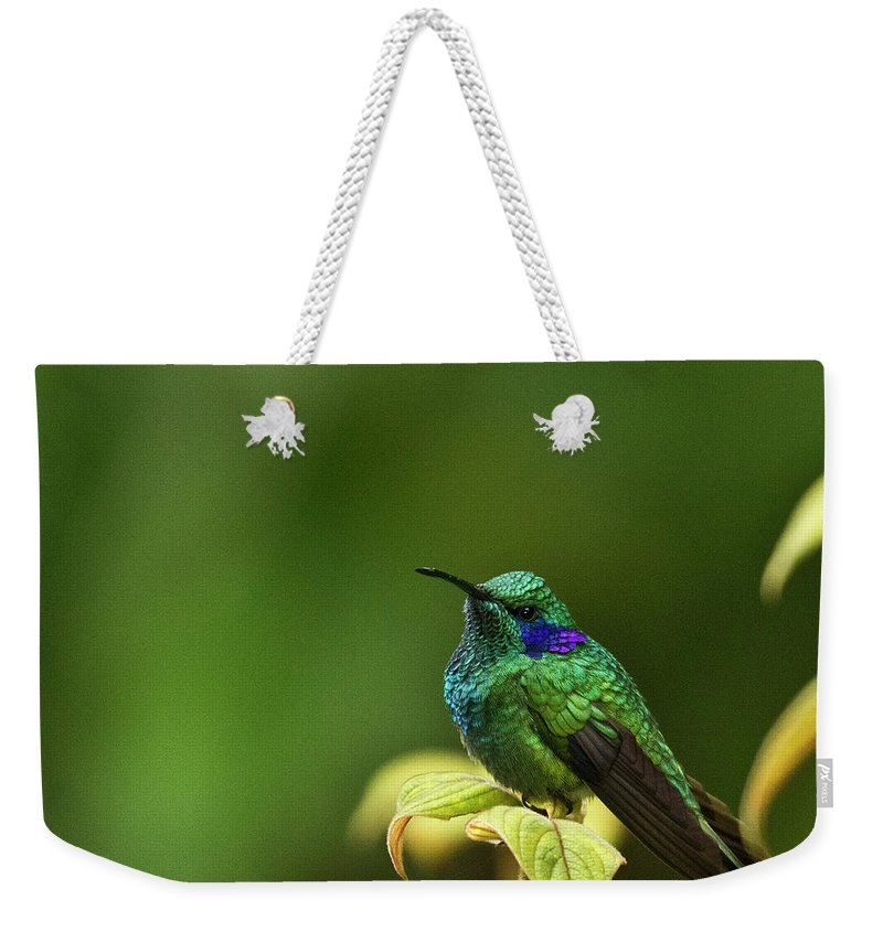 Bird Weekender Tote Bag featuring the photograph Green Violetear Hummingbird by Heiko Koehrer-Wagner