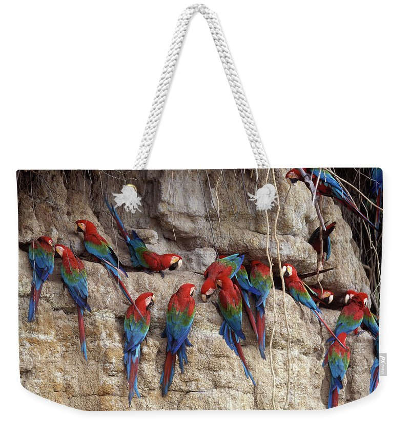 Green-winged Macaw Weekender Tote Bag featuring the photograph Green-winged Macaw by Francois Gohier
