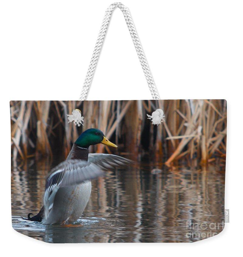 Aves Weekender Tote Bag featuring the photograph Greetings by Jivko Nakev