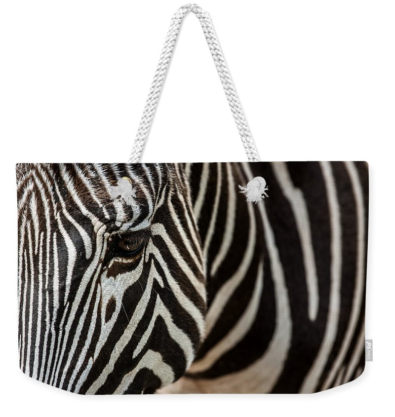 Gr�vy's Zebra Weekender Tote Bag featuring the photograph Grevy's Zebra 4 by Arterra Picture Library