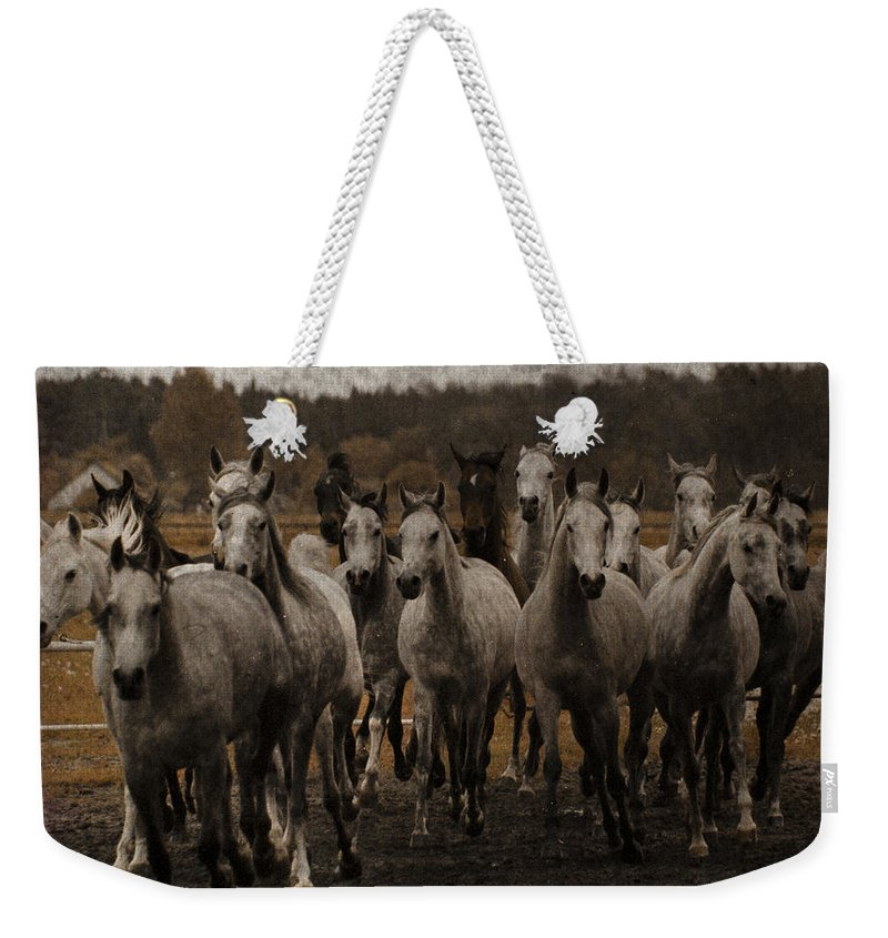 Horse Weekender Tote Bag featuring the photograph Grey Horses by Angel Ciesniarska