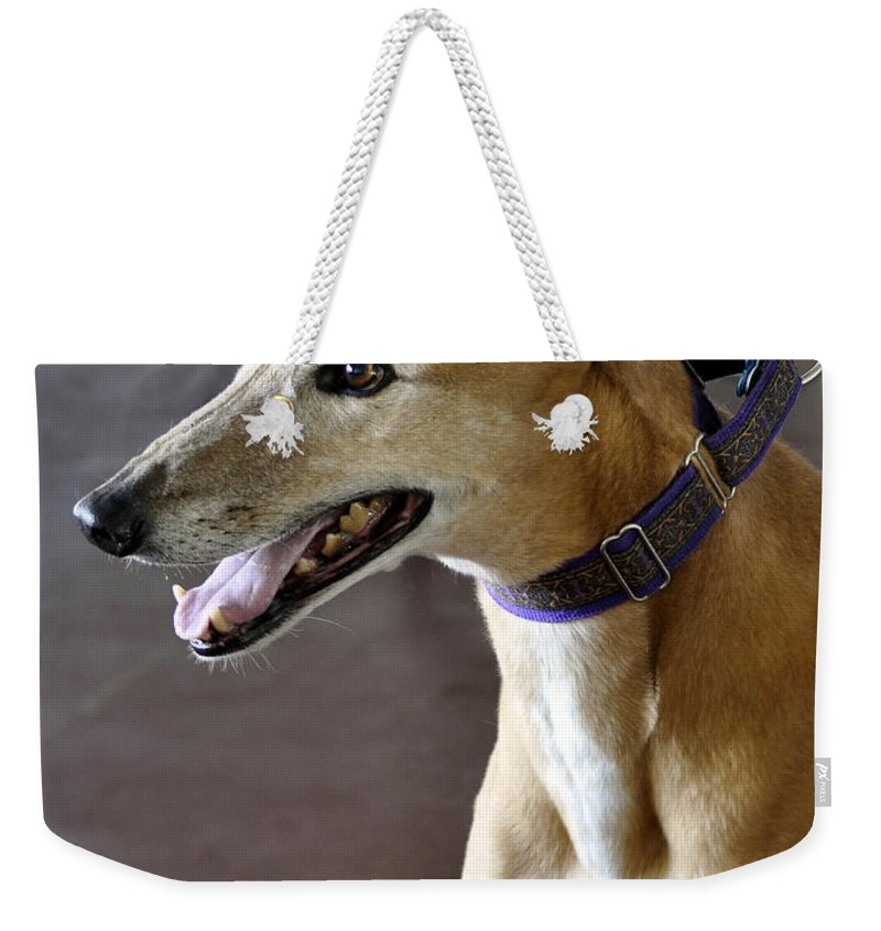 Fawn Weekender Tote Bag featuring the photograph Greyhound Dog by Sally Rockefeller