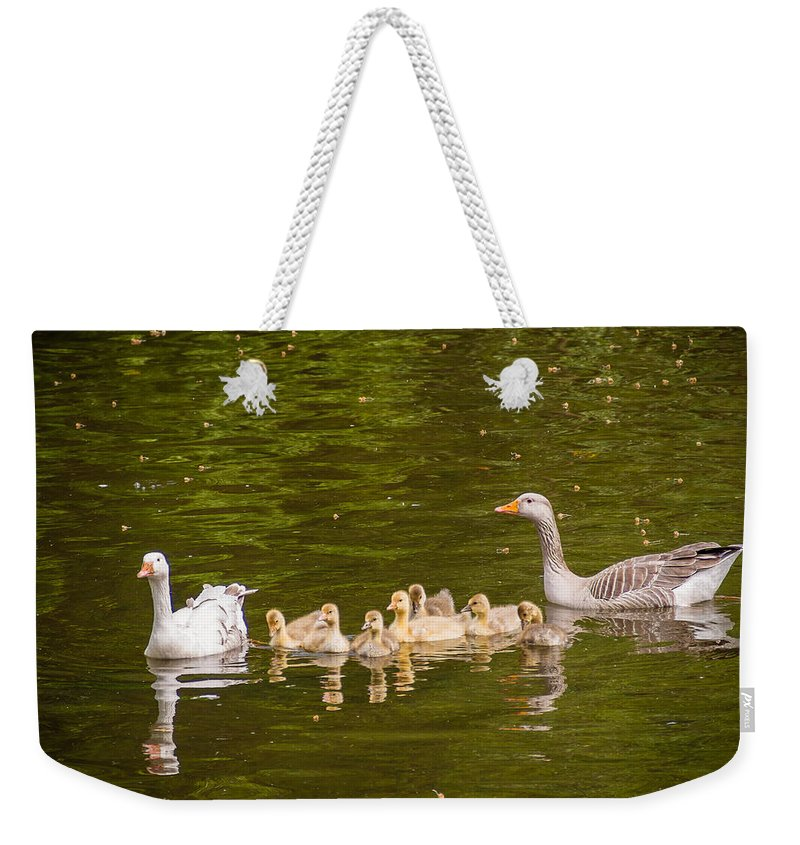 Brown Weekender Tote Bag featuring the photograph Greylag Goose Family by Mark Llewellyn