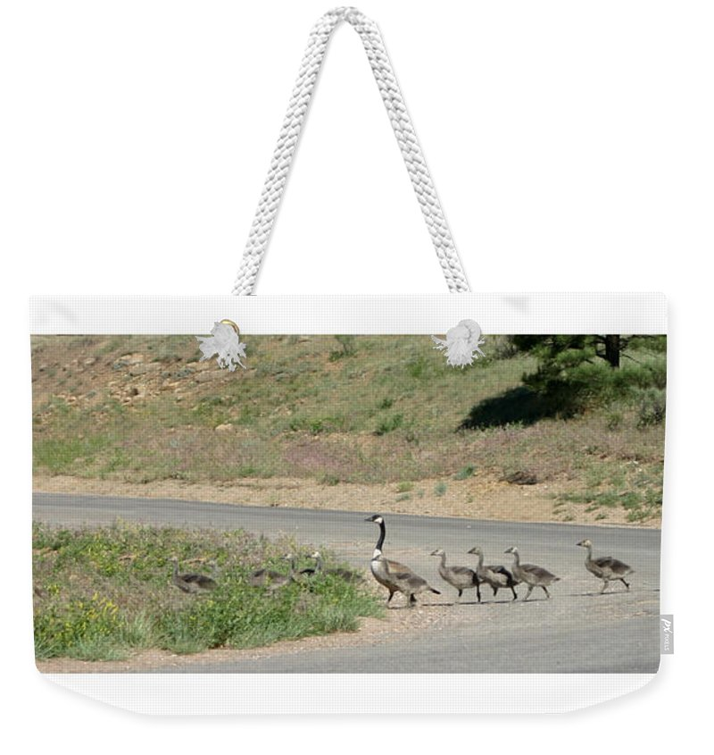 Canadian Geese Weekender Tote Bag featuring the photograph Grid Lock In Angle Fire N M by Jack Pumphrey