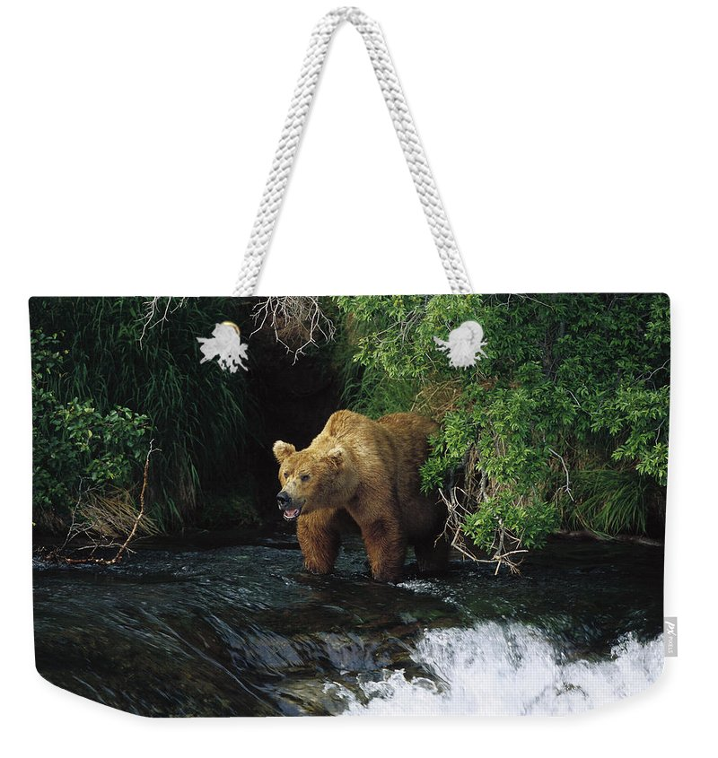 Feb0514 Weekender Tote Bag featuring the photograph Grizzly Bear Fishing Brooks River Falls by Konrad Wothe