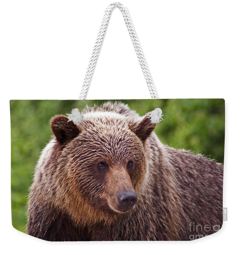 Grizzly Bear Weekender Tote Bag featuring the photograph Grizzly Portrait by Stanza Widen