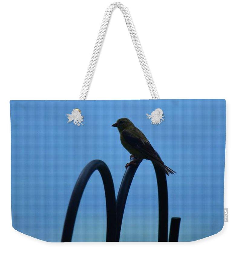 Grosbeak Silhouette Weekender Tote Bag featuring the photograph Grosbeak Silhouette by Maria Urso