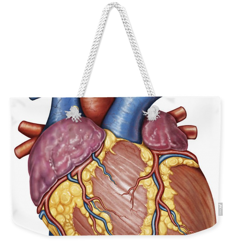 Gross Anatomy Of The Human Heart Weekender Tote Bag For Sale By