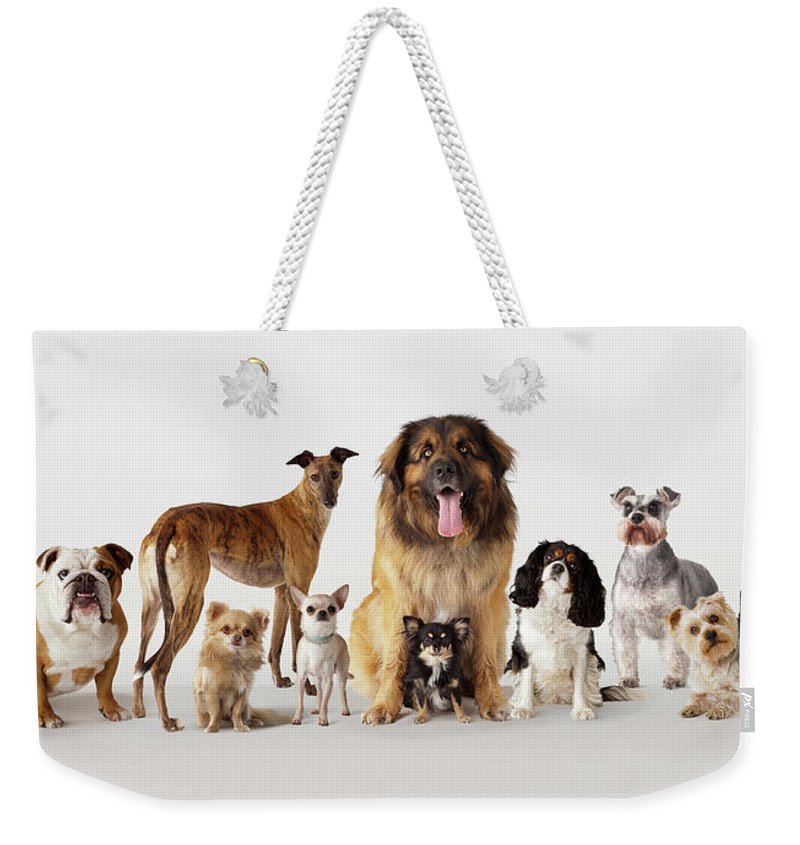 Pets Weekender Tote Bag featuring the photograph Group Portrait Of Dogs by Compassionate Eye Foundation/david Leahy