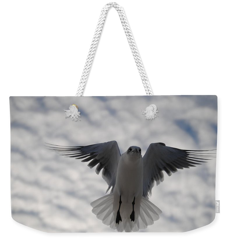 Seagull Weekender Tote Bag featuring the photograph Gull From Below by Jon Cody
