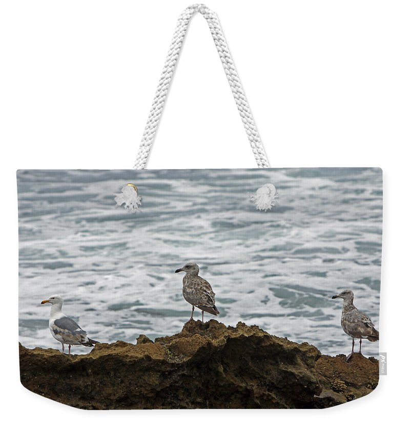 Sea Gulls Weekender Tote Bag featuring the photograph Gulls Podium by Shoal Hollingsworth