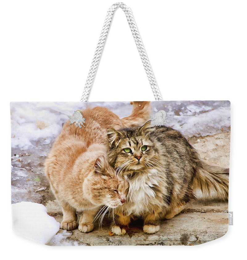 Cats Weekender Tote Bag featuring the photograph Gutter Kitties Five by Alice Gipson