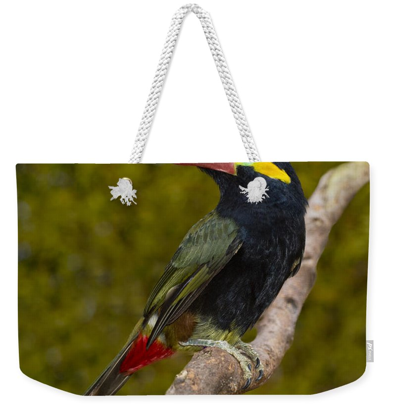 Guyana Toucanet Weekender Tote Bag featuring the photograph Guyana Toucanet by Anthony Mercieca