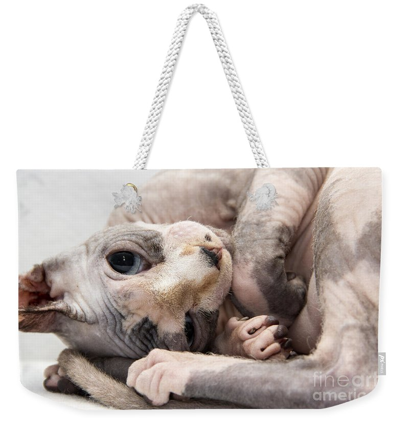 Cat Weekender Tote Bag featuring the photograph Hairless Cat by Jeannette Hunt