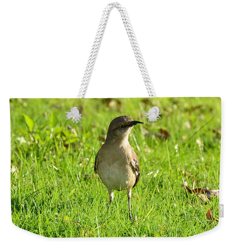 Robin Weekender Tote Bag featuring the photograph Half Beak Will Travel by David Lee Thompson