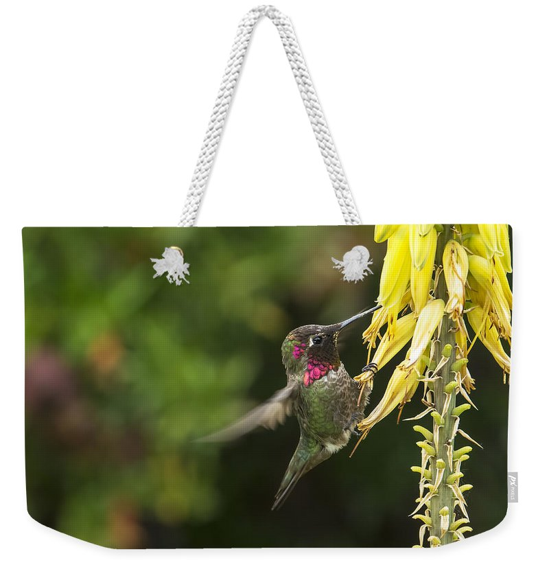 Annas Hummingbird Weekender Tote Bag featuring the photograph Hangin For A Meal by Mike Herdering