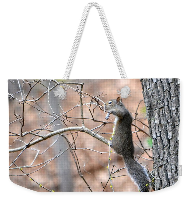 Squirrel Weekender Tote Bag featuring the photograph Hangin' Out by Deena Stoddard