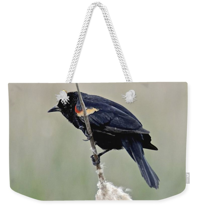 Bird Weekender Tote Bag featuring the photograph Hanging On by Carol Bradley