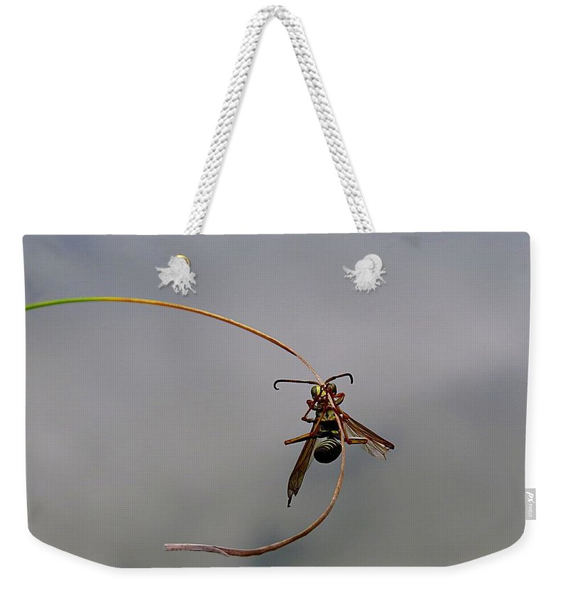 Wasp Weekender Tote Bag featuring the photograph Hanging On by MTBobbins Photography