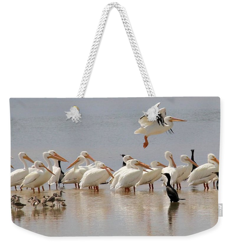 Pelican Weekender Tote Bag featuring the photograph Hanging Out At The Ol' Sandbar by Doris Potter