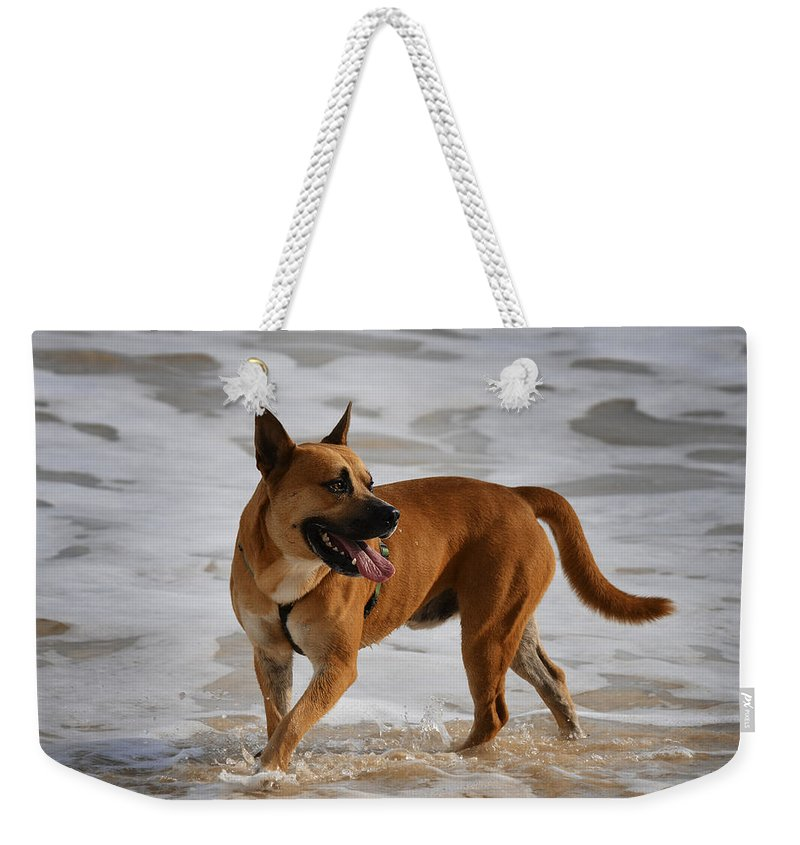 Dog Weekender Tote Bag featuring the photograph Happy Dogs 5 by Xueling Zou