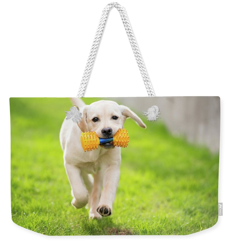 Pets Weekender Tote Bag featuring the photograph Happy Hour by Stefan Cioata