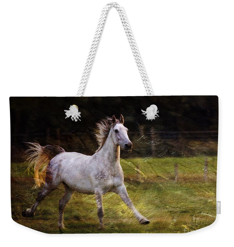 Grey Horse Weekender Tote Bag featuring the photograph Happy Run by Angel Ciesniarska