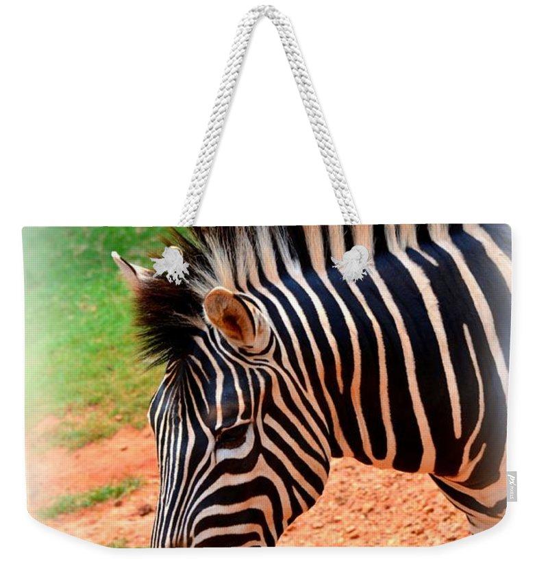 Hartman Zebra Weekender Tote Bag featuring the photograph Hartman Zebra by Tara Potts
